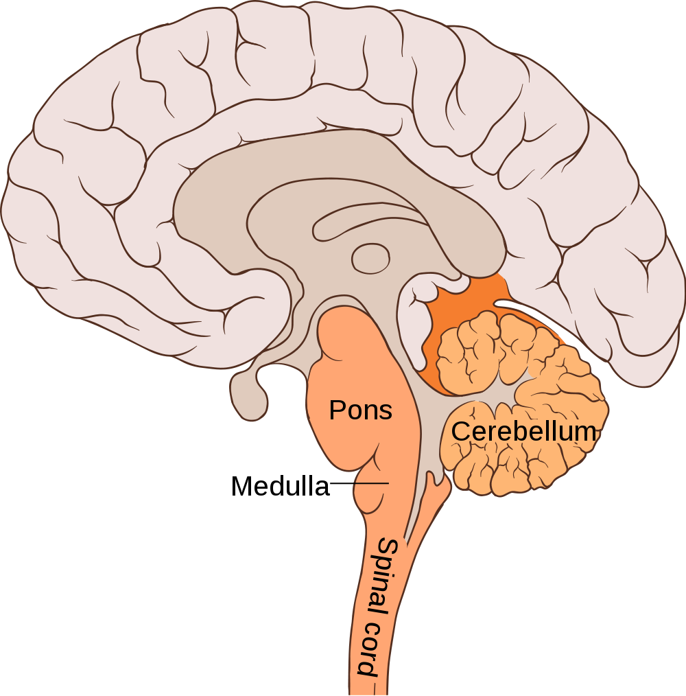 Helping a six year old with cancer of the brain stem cancer story brain pons ccuart Image collections